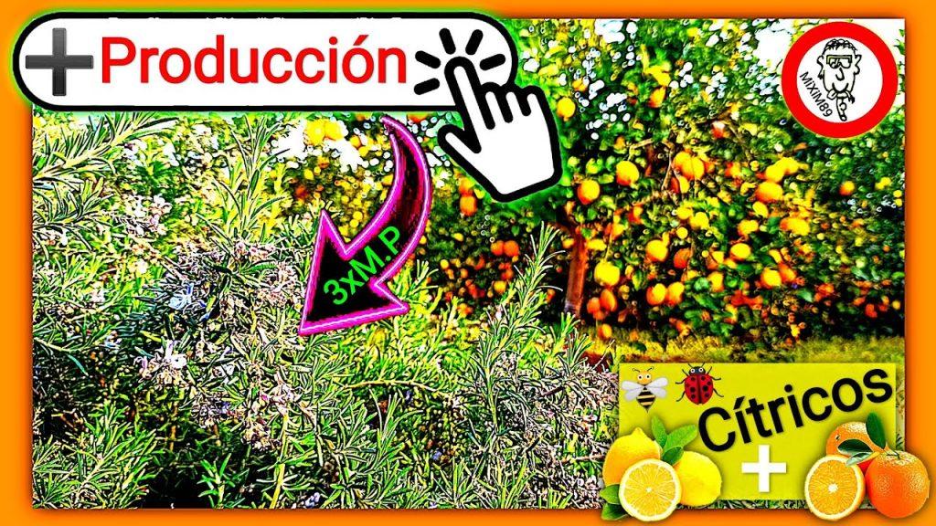 Aumentar polinización en citricos mas polinizadores mas producción by mixim89