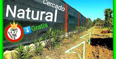 Cercado natural esquejes adelfa o baladre by mixim89