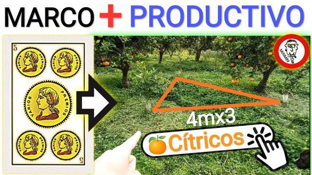 Marcos de plantación mas productivos en citricos marco de 5 de oros