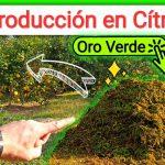Mulching y abono verde aumentar producción en citricos by mixim89