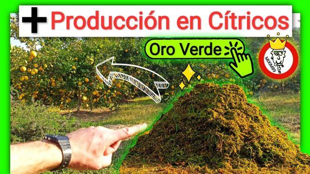 Como Mejorar e Incrementar la Producción en Cítricos Gracias al Mulching y Abono Verde by mixim89