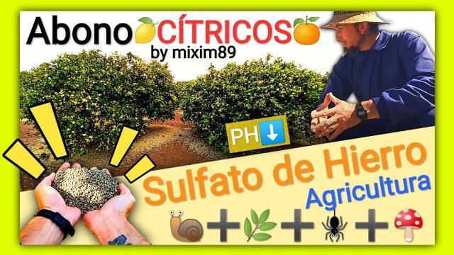 5 usos del sulfato de hierro en la agricultura abonos en cítricos y plantas en general naranjos y limoneros by mixim89