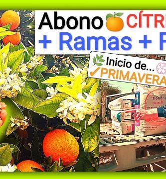 Abonado en citricos crecimiento y floracion naranjos y limoneros by mixim89