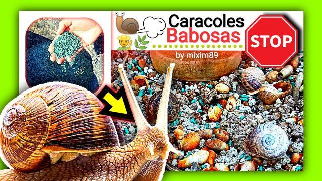 Cebo granulado para combatir plaga de caracoles y babosas en agricultura y jardineria by mixim89
