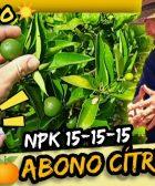 Mejor fertilizante de verano para abonado en cítricos triple 15 o 15-15-15 dosis y modo de empleo by mixim89