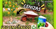 Abonado en citricos usos de las cenizas en los cítricos y plantas agricultura regenerativa by mixim89