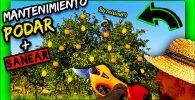 Como realizar paso a paso la poda de mantenimiento en citricos adultos con tijeras de poda a batería by mixim89