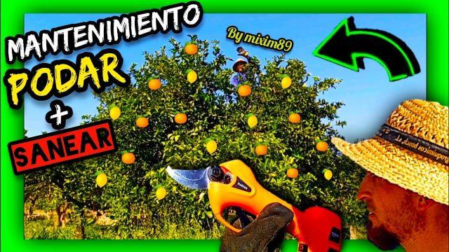 PODA de MANTENIMIENTO en CÍTRICOS ADULTOS (Naranjo y Limonero) by mixim89
