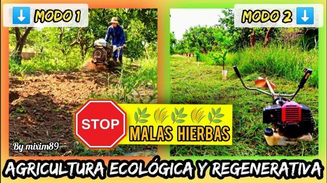 Convierte las MALAS HIERBAS en ABONO VERDE Agricultura Ecológica y Regenerativa by mixim89