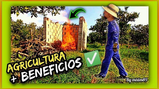 ¿Quemar o Triturar Restos de Poda? Fertilización Orgánica Natural (FÓSFORO CÍTRICOS) By mixim89